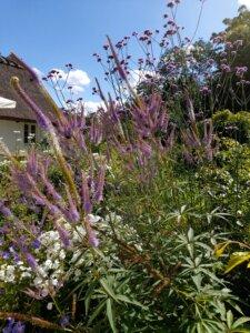sommerfugleplanter i haven